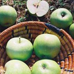 stubaste jabuke zeleni dragulj